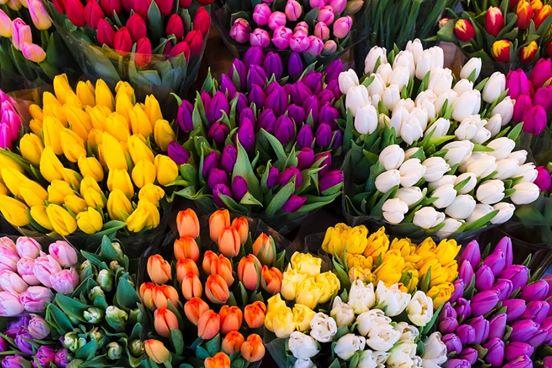 Nucatolo Creazioni Floreali